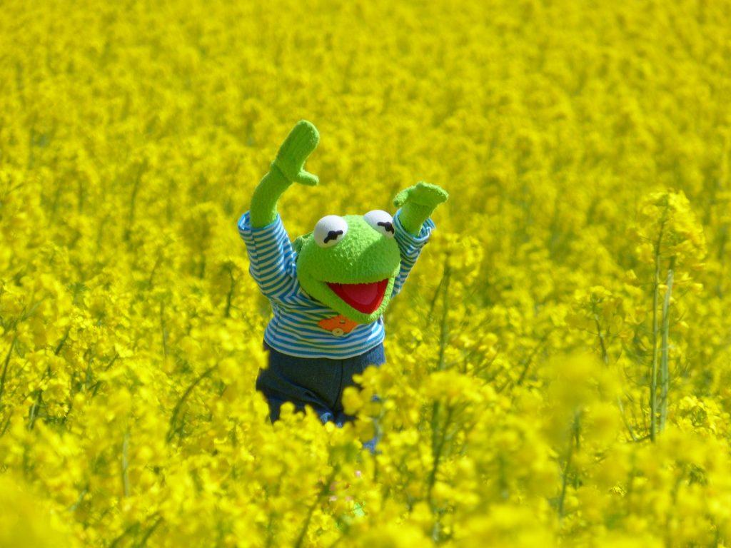 Жаба, жабокът Кърмит в цветя