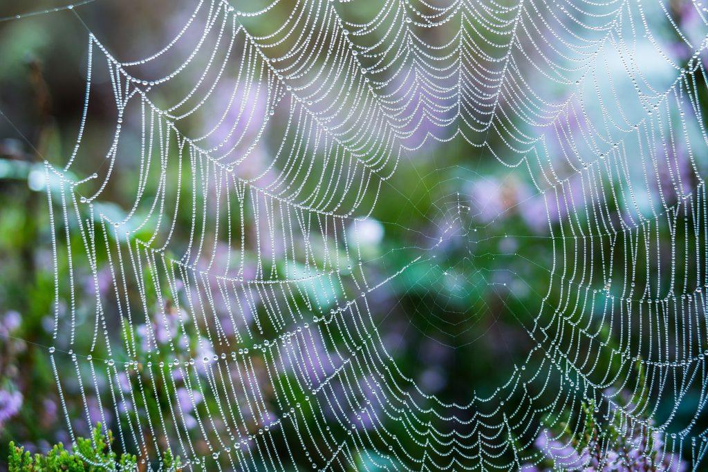 net, cobweb